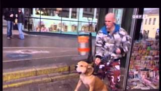 Download ORF Doku Hunde Am Schauplatz 4/4 Video