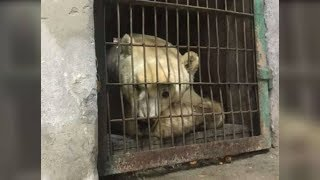 Download Former Circus Bear Can't Believe It When He Sees His Sprawling New Home Video