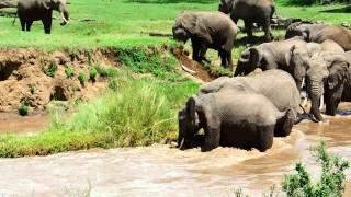 Download Elephant calf river rescue © Sandy Gelderman Video
