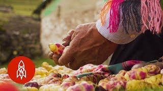 Download This Peruvian Farmer Grows Over 400 Varieties of Potatoes Video