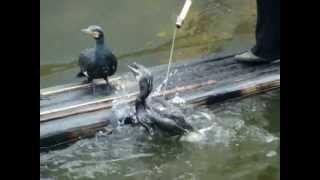 Download صيد السمك في الصين.MPG Video