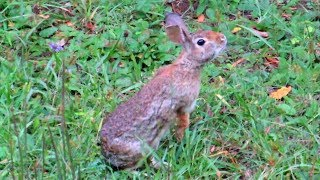 Download Wild Rabbits Grazing - A Meditation Video