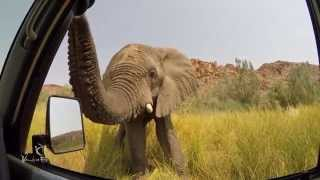 Download Very curious elephant in Damaraland, Namibia! Video