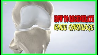 Download This Is How To Regenerate Your Knee Cartilage! | Best Home Remedies Video