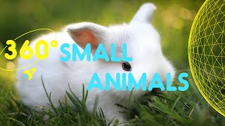 Download Meet the Small Animals Compilation | 360 Degrees for Kids Video