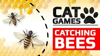 Download CAT GAMES - CATCHING BEES (ENTERTAINMENT VIDEOS FOR CATS TO WATCH) Video