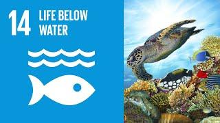 Download UN Sustainable Development Goals | Life Below Water (14) Video