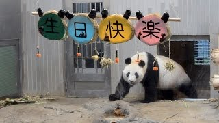 Download 【ドタバタバースデーw♪】🐼パンダのシンシン☆11歳のお誕生日会♪【おめでとう♪】 Giant panda -ShinShin-☆Happy 11th Birthday Party♪ Video