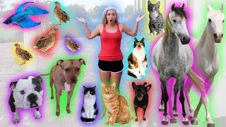 Download FEEDING ALL MY PETS * NIGHT TIME ROUTINE * | NICOLE SKYES Video