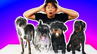 Download I Bought Fake Dogs Online! Video