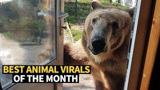 Download Top Viral Animal Videos - May 2019 Video