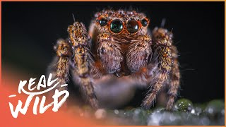 Download A Bug Invasion: The Dominant Life Form On The Planet! | Bugsworld | Wild Things Documentary Video