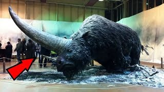 Download 5 Mythical Creatures That Actually Existed! Video