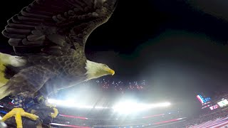 Download Challenger Soars at Philly Eagles Military Appreciation Game 2014 Video
