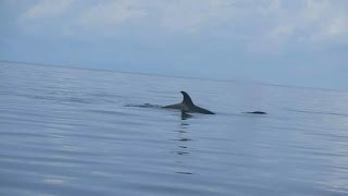 Download Sipadan divers spot orcas in Malaysian waters Video