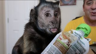 Download Monkey Unboxing Mail Vlog! (MONKEY MONDAY) Video