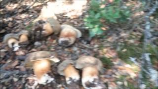 Download Boletus Aereus Julio 2014 Video