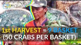Download Crab harvest of Ms Ethel Benliro from Brgy. Monching, Siay, Zamboanga Sibugay Video