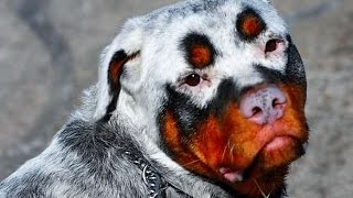 Download 15 STRANGEST Animal Markings Video