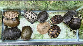 Download Releasing the Turtles in the Outdoor Pond Video