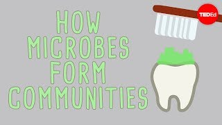 Download The microbial jungles all over the place (and you) - Scott Chimileski and Roberto Kolter Video