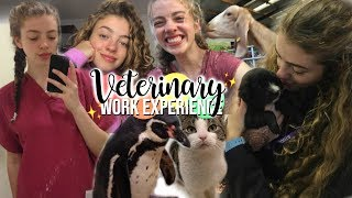 Download All The Veterinary Work Experience I Did! Advice & What I Learned 🦜 Video