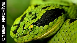 Download 15 Most Venomous Snakes in the World Video
