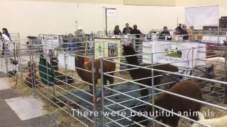Download Southeastern Select Alpaca Show Video