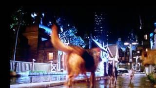 Download Bull terrier ingles babe 2 Video