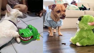 Download Dog and Cat Reaction to Toy - Funny Dog & Cat Toy Reaction Compilation Video