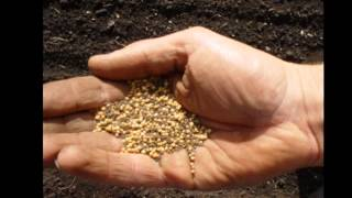 Download mustard seed cures ! Video