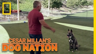 Download Learning Control | Cesar Millan's Dog Nation Video