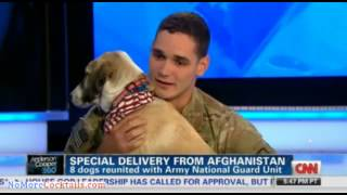 Download From Afghanistan with love: Soldiers reunited with dogs they promised to not leave behind Video
