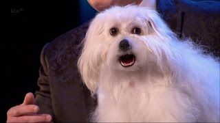 Download Britain's Got Talent 2015 S09E01 Marc Métral with his Hilarious Talking/Singing Dog Wendy Full Video Video