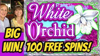Download BIG WIN! 100 SPINS-RECORD RE-TRIGGERS FOR WHITE ORCHID? Video