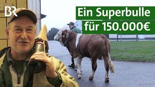 Download Superbulle: Stier Weitblick im Einsatz   Unser Land   BR Fernsehen Video