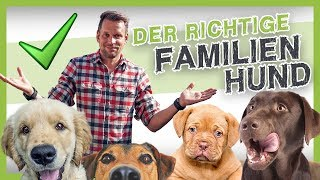 Download Die 5 besten Familienhunde (den richtigen Hund finden) Video