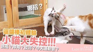 Download 第一次玩逗貓棒,小貓全都瘋狂了!【好味貓日常】EP16 Video
