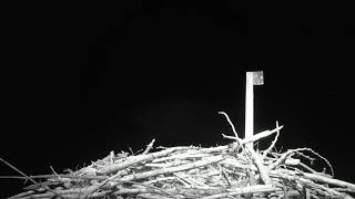 Download Osprey Nest - Charlo Montana Cam 01-20-2018 17:30:43 - 18:30:43 Video