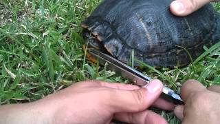 Download Emergency Turtle rescue Video