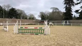 Download 16.3hh 6yr old Irish Sport Horse for sale Video