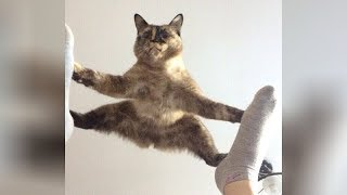 Download It's TIME for SUPER LAUGH! - Best FUNNY CAT videos Video