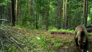 Download Леса Тайги. Красивые и дикие места России. Video