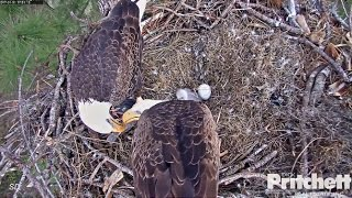 Download SWFL Eagles ~ Pond Visit; M15 lovingly Feeds Harriet 1.1.17 Video
