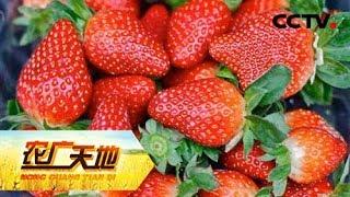 "Download 《农广天地》 20180601 百棵草莓成就的""草莓大王""   CCTV农业 Video"