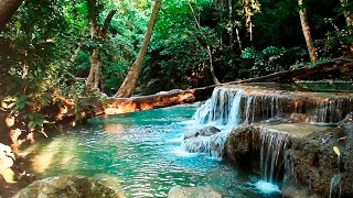 Download Rainforest Sounds - Water Sound Nature Meditation Video