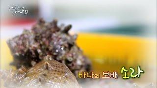 Download [어영차 바다야] 약방의 감초, 참소라, 뿔소라 Video