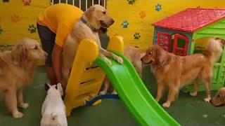 Download Doggie Daycare || ViralHog Video