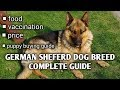 Download German shepherd dog guide in hindi II Puppy buying guide II Vaccination II food Video