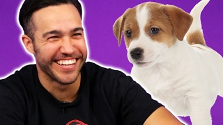 Download Fall Out Boy Plays With Puppies (While Answering Fan Questions) Video